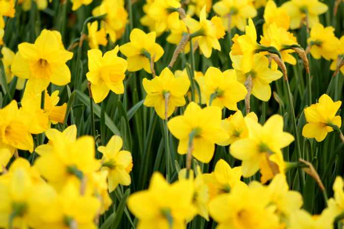 close up photography of yellow flowers