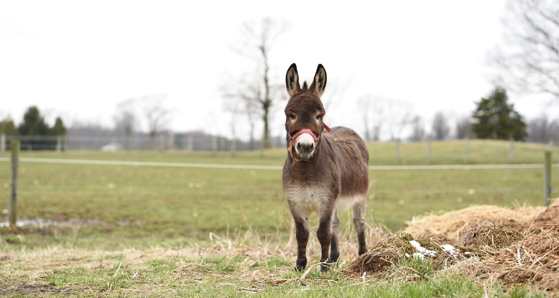 brown and white donkey on green grass field