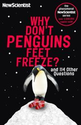 why-don-t-penguins-feet-freeze-2